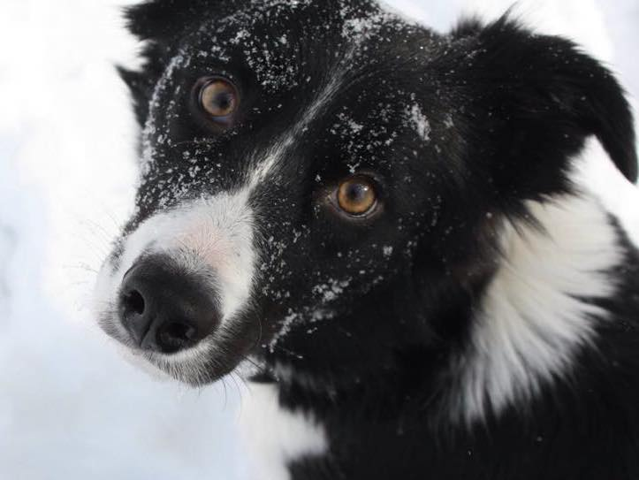 WHAT IS A DOG BEHAVIORIST?   FOX 28 Spokane
