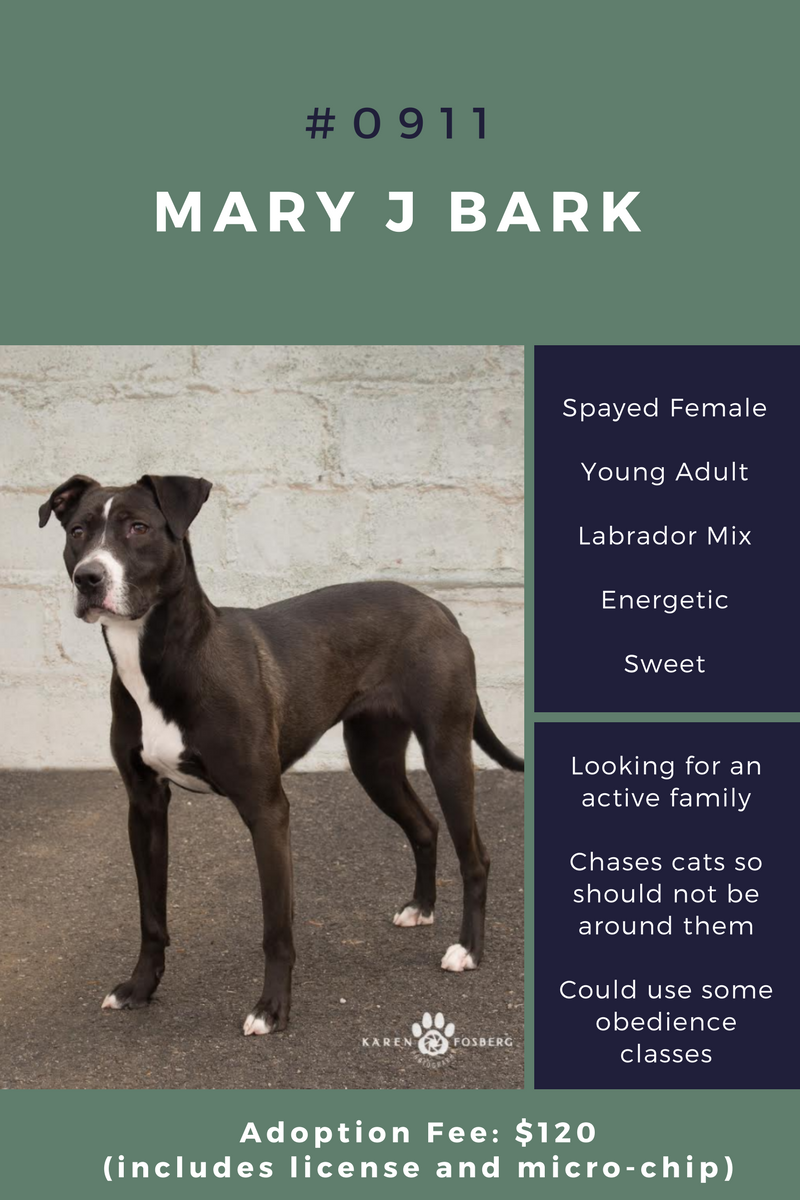 Scraps Spokane Dog Adoption