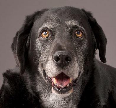 FROZEN TREATS FOR DOGS