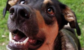 MISREPRESENTATION OF PETS AS SERVICE ANIMALS—WILL SPOKANE'S NEW ORDINANCE DETER IT?