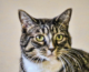 Happy Tales Pet of the Week – THELMA #5948