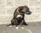 Happy Tales Pet of the Week – HONEY #7242