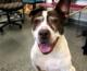 VIDEO: Happy Tales Pet of the Week – Adeline #13528