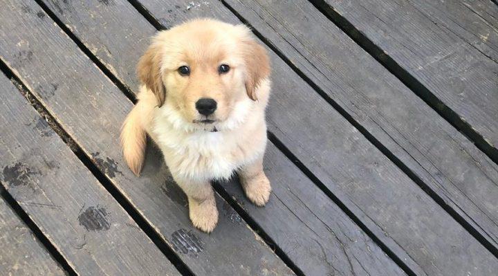 Raising A Puppy During The Pandemic Fox 28 Spokane
